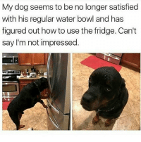 Memes, Butterfly, and How To: My dog seems to be no longer satisfied  with his regular water bowl and has  figured out how to use the fridge. Can't  say I'm not impressed Follow my other accounts @antisocialtv @lola_the_ladypug @x__antisocial_butterfly__x ❤️