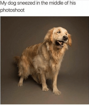.: My dog sneezed in the middle of his  photoshoot .