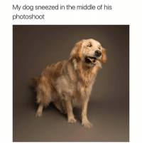 Memes, The Middle, and 🤖: My dog sneezed in the middle of his  photoshoot So majestic.