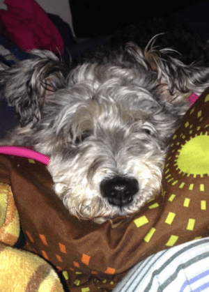 The Middle, Dog, and  Night: My dog snuggling up to me in the middle of the night