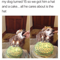 Funny, Cake, and Got: my dog turned 15 so we got him a hat  and a cake... all he cares about is the  hat Lmaooo