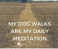 Good Morning! 🐾: MY DOG WALKS  ARE MY DAILY  MEDITATION Good Morning! 🐾