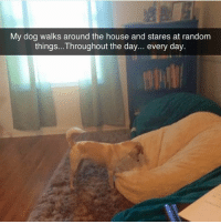Funny, Instagram, and Meme: My dog walks around the house and stares at random  things...Throughout the day... every day. @_theblessedone is hands down the best meme account on Instagram