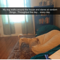 Memes, House, and 🤖: My dog walks around the house and stares at random  things...Throughout the day... every day same (thx for following @chaos.reigns_)