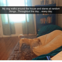 Memes, Butterfly, and House: My dog walks around the house and stares at random  things...Throughout the day... every day. Follow my other accounts @antisocialtv @lola_the_ladypug @x__antisocial_butterfly__x ❤️