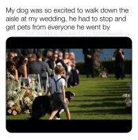 Bless Up, Fanta, and Love: My dog was so excited to walk down the  aisle at my wedding, he had to stop and  get pets from everyone he went by  Vid: Reddit u/brendo12(DrSmashlove This is exactly the preciousness and love I need to cleanse my palette after having watched one of my favorite musicians, an erstwhile hometown hero, devolve completely into a depressed and wretched sunken place of ignorance and lunacy and butter up to the most wretched cheeto-looking orange Fanta of a half human half warthog creature in a navy blue suit the world has ever known - good night! 😍 (Careful who u marry 👀) BLESS UP 😤😍😂