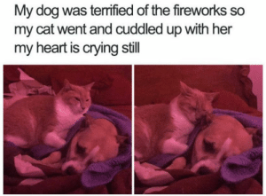 Animals, Crying, and Dogs: My dog was terrified of the fireworks so  my cat went and cuddled up with her  my heart is crying still Dog Memes Of The Day 32 Pics – Ep44 #dogs #dogmemes #lovelyanimalsworld - Lovely Animals World
