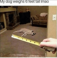 Dank Memes, Feet, and Dog: My dog weighs 6 feet tall Imao