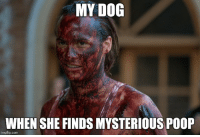 My 4 year old hound dog everybody: MY DOG  WHEN SHE FINDS MYSTERIOUS POOP  imgflip.com My 4 year old hound dog everybody