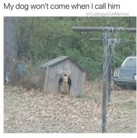 Chill, Ghetto, and Memes: My dog won't come when I call him  CabbageCatMemes Lol tf wrong with my dog ——————————————————————————————————————— My other accounts: @themememonk @memedoctor_ ————————————————————— mememonkmememonk mememonk bruh lmao hood meme chill nochill comedy pepe l4l ghetto dank dankmeme dankmemes memes lmfao triggered dank filthyfrank itslit lit realniggahours petty lol funny prank bestmemes bestmeme