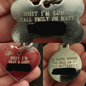 My dogs' tags: My dogs' tags