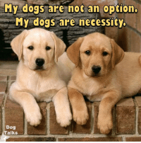 memes: My dogs are not an option  My dogs are necessity.  Dog  Talks