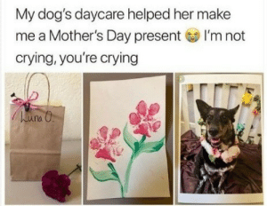 Crying, Dogs, and Mother's Day: My dog's daycare helped her make  me a Mother's Day present I'm not  crying, you're crying  una O Happy fur mamas day.