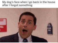 Dogs, House, and Back: My dog's face when I go back in the house  after I forgot something  Ein