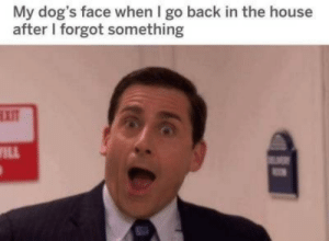 Dogs, House, and Back: My dog's face when I go back in the house  after I forgot something  EXIT  WILL  M