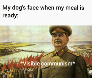 Every doggo: My dog's face when my meal is  ready:  *Visible communism* Every doggo