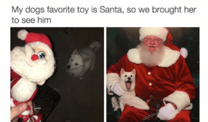 Dogs, Funny, and Memes: My dogs favorite toy is Santa, so we brought her  to see him 32 Funny Memes About As Satisfying As A Long Term Relationship