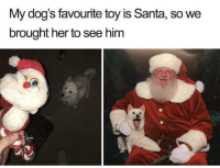 Definitely, Dogs, and Tumblr: My dog's favourite toy is Santa, so we  brought her to see him awesomacious:  Good boy is definitely on the nice list