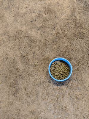 My dog's food is the same color as the carpet and I'm stoned. Excited to spend 4 hours collecting all these pieces lol.: My dog's food is the same color as the carpet and I'm stoned. Excited to spend 4 hours collecting all these pieces lol.