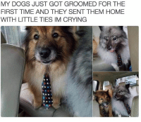 Crying, Dogs, and Memes: MY DOGS JUST GOT GROOMED FOR THE  FIRST TIME AND THEY SENT THEM HOME  WITH LITTLE TIES IM CRYING Follow me @antisocialtv @lola_the_ladypug @x__social_butterfly__x @x__antisocial_butterfly__x