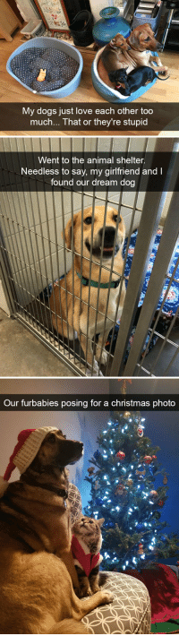 Christmas, Dogs, and Love: My dogs just love each other too  much... That or they're stupid   Went to the animal shelter.  Needless to say, my girlfriend and I  found our dream dog   Our furbabies posing for a christmas phota Dog snaps