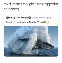🔥@no.body_special🔥is my favourite page on instagram 💕🌈🦄: my dumbass thought it was trapped in  an iceberg  Enjoyable Puppy @Enjoyablepuppy  Great white Shark in South Africa 🔥@no.body_special🔥is my favourite page on instagram 💕🌈🦄