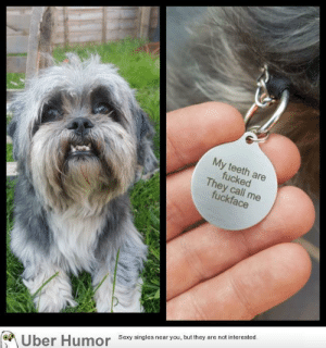 Dad, Sexy, and Tumblr: My  eeth  ed  ey call  Sexy singles near you, but they are not interested.  Uber Humor failnation:  Girlfriend's dad thought he would treat his daughters dog to a new name tag.