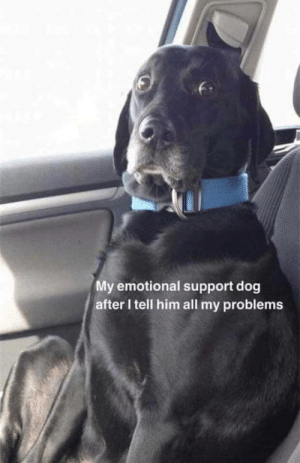 Oh Well, Dog, and Him: My emotional support dog  after I tell him all my problems Oh well