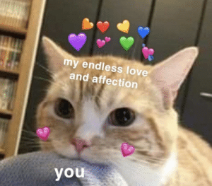 Love, Endless Love, and Wholesome: my endless love  and affection  you Wholesome Cat gives you endless love