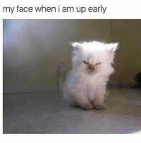 Bitch, Game, and Girl Memes: my face when i am up early Resting bitch face game strong