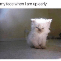 Memes, My Face When, and 🤖: my face when i am up early Why am I awake? 😂