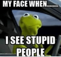 Via Kermit memes: MY FACE WHEN.  I SEE STUPID  PEOPLE Via Kermit memes