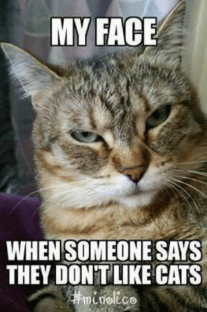 Cats, My Face When, and Face: MY FACE  WHEN SOMEONESAYS  THEY DONTLIKE CATS  noltco