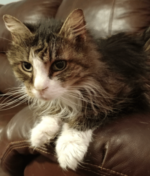 My family's 17 year old cat. Much nicer now than when she was younger.: My family's 17 year old cat. Much nicer now than when she was younger.