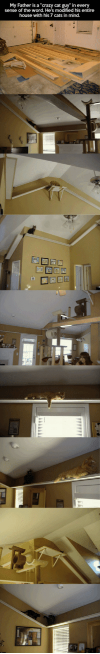 """Cats, Crazy, and Dad: My Father is a """"crazy cat guy"""" in every  sense of the word. He's modified  his entire  house with his 7 cats in mind. <p>Crazy Cat Dad.</p>"""