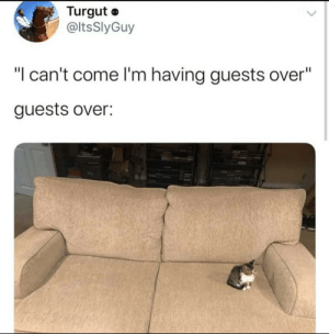 my favorite guest: my favorite guest