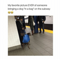 """Meme, Memes, and Subway: My favorite picture EVER of someone  bringing a dog """"in a bag"""" on the subway meme dankmemes memelord dailymemes relatable dailymemes"""