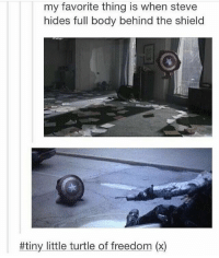 Memes, Marvel, and Turtle: my favorite thing is when steve  hides full body behind the shield  #tiny little turtle of freedom (x) ; Steve is a turtle🐢 And the fact that Chris can fit under that shield, damn. TheAvengers CaptainAmerica SteveRogers Marvel ChrisEvans