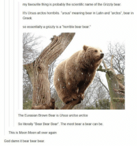 """God, Bear, and Meaning: my favourite thing is probably the scientific name of the Grizzly bear.  It's Ursus arctos horribilis. """"ursus meaning bear in Latin and """"arctos"""", bear in  Greek  so essentially a grizzly is a """"horrible bear bear.""""  The Eurasian Brown Bear is Ursus arctos arctos  So literally Bear Bear Bear. The most bear a bear can be.  This is Moon Moon all over again  God damn it bear bear bear. <p>The Scientific Name Of The Bear.</p>"""
