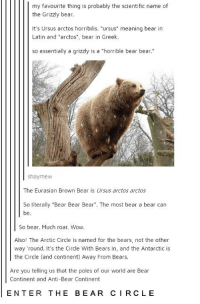 """Wow, Bear, and Bears: my favourite thing is probably the scientific name of  the Grizzly bear.  It's Ursus arctos horribilis. """"ursus"""" meaning bear in  Latin and """"arctos"""", bear in Greek.  so essentially a grizzly is a """"horrible bear bear.""""  shaymew  The Eurasian Brown Bear is Ursus arctos arctos  So literally """"Bear Bear Bear"""". The most bear a bear can  be  So bear. Much roar. Wow  Also! The Arctic Circle is named for the bears, not the other  way round. It's the Circle With Bears In, and the Antarctic is  the Circle (and continent) Away From Bears.  Are you telling us that the poles of our world are Bear  Continent and Anti-Bear Continent  ENTER THE BEAR CIRCLE"""