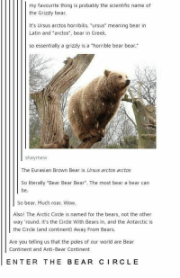 """Wow, Bear, and Bears: my favourite thing is probably the scientific name of  the Grizzly bear.  It's Ursus arctos horribilis. """"ursus"""" meaning bear in  Latin and """"arctos"""", bear in Greek  so essentially a grizzly is a """"horrible bear bear.  shaymew  The Eurasian Brown Bear is Ursus arctos arctos  So literally """"Bear Bear Bear. The most bear a bear can  be  So bear. Much roar. Wow.  Also! The Arctic Circle is named for the bears, not the other  way round. It's the Circle With Bears In, and the Antarctic is  the Circle (and continent) Away From Bears.  Are you telling us that the poles of our world are Bear  Continent and Anti-Bear Continent  ENTER THE BEAR CIRCLE"""