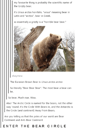 "Wow, Bear, and Bears: my favourite thing is probably the scientific name of  the Grizzly bear.  It's Ursus arctos horribilis. ""ursus"" meaning bear in  Latin and ""arctos"", bear in Greek.  so essentially a grizzly is a ""horrible bear bear.""  shaymew  The Eurasian Brown Bear is Ursus arctos arctos  So literally ""Bear Bear Bear"". The most bear a bear can  be.  So bear. Much roar. Wow.  Also! The Arctic Circle is named for the bears, not the other  way 'round. It's the Circle With Bears In, and the Antarctic is  the Circle (and continent) Away From Bears.  Are you telling us that the poles of our world are Bear  Continent and Anti-Bear Continent  ENTER THE BEAR CIRCLE Forget about your worries and your strife"