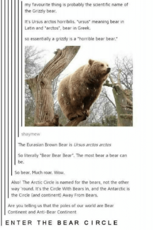 """Much wow. so much to bear: my favourite thing is probably the scientific name of  the Grizzly bear.  It's Ursus arctos horribilis. """"ursus meaning bear in  Latin and """"arctos, bear in Greek.  so essentially a grizzly is a """"horrible bear bear  shaymew  The Eurasian Brown Bear is Ursus arctos arctos  So literally """"Bear Bear Bear"""". The most bear a bear can  be.  So bear. Much roar. Wow  Also! The Arctic Circle is named for the bears, not the other  way round. It's the Circle With Bears In, and the Antarctic is  the Circle (and continent) Away From Bears.  Are you telling us that the poles of our world are Bear  Continent and Anti-Bear Continent  ENTER THE BEAR CIRCLE Much wow. so much to bear"""