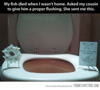 Memes, Fish, and Fishing: My fish died when I wasn't home. Asked my cousin  to give him a proper flushing. She sent me this.  more awesome pictures at  THEMETAPICTURE.COM
