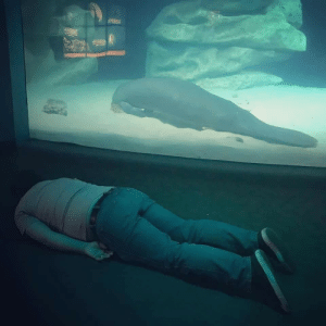 My friend's cousin visited the aquarium today.: My friend's cousin visited the aquarium today.