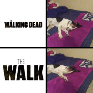 my friend asked me to make his dog into a meme so here it is: my friend asked me to make his dog into a meme so here it is