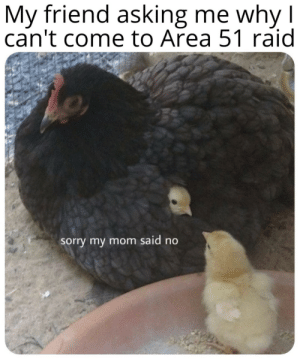 Sorry, MeIRL, and Mom: My friend asking me why I  can't come to Area 51 raid  sorry my mom said no meirl