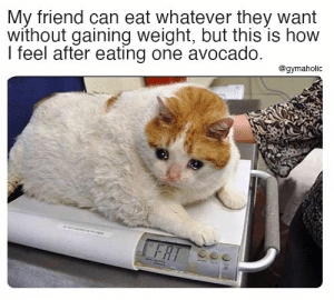 My friend can eat whatever they want without gaining weight, but this is how I feel after eating one avocado.  Gymaholic App: https://www.gymaholic.co  #fitness #motivation #workout #gymaholic #meme: My friend can eat whatever they want without gaining weight, but this is how I feel after eating one avocado.  Gymaholic App: https://www.gymaholic.co  #fitness #motivation #workout #gymaholic #meme