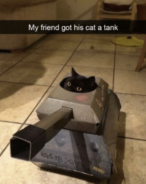 Got, Cat, and Tank: My friend got his cat a tank  HOWS MDRNN  CA ITION I need to have this