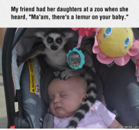 """Dank, 🤖, and Zoo: My friend had her daughters at a zoo when she  heard, """"Ma'am, there's a lemur on your baby.""""  COM """"Let's take picture of the Lemur on the baby"""" I'm surprised that baby is still out cold."""